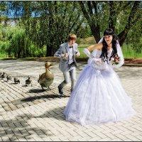 Танец маленьких утят :: Валерий Шейкин