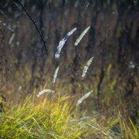 Краски осени :: Ivan teamen