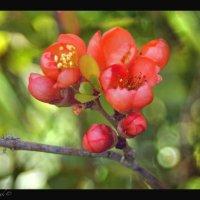 Одно мгновение весны... :: Елена Kазак