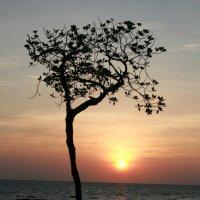 Дерево :: Александр Другов