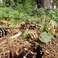 В лесу так тихо, и спокойно :: Виталина Хуст
