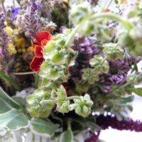 Весенние цветы :: Виталина Хуст