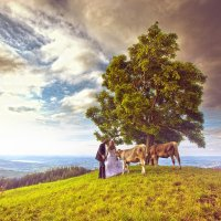 дерево :: Константин Литвинов