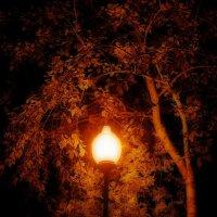 Ночной парк :: Натали V