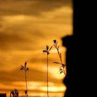 Рижский закат :: Lina Liber