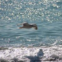 Seagull :: Юрий Комаров