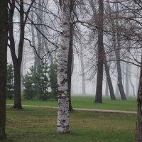 Петровский парк :: Анастасия Барановская