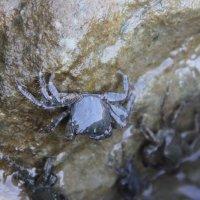 Crab :: Юрий Комаров