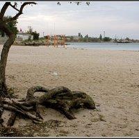 Осенний пляж :: L Nick