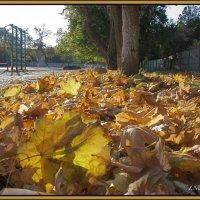 Осень в школьном дворе :: L Nick