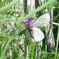 Бабочка :: светлана мартынова