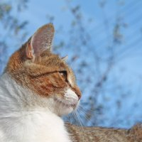 Кот ,просто Кот :: Кира Зайцев