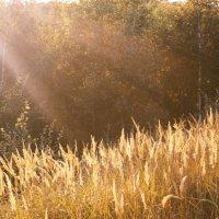 Золотая осень) :: О. Ф.