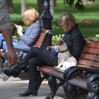 Девушка с собачкой :: Alexander Zzz...