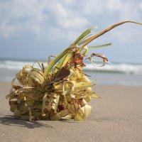 Sea outcasts. Bali. Indonesia. :: Eva Langue