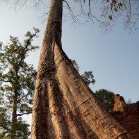 Камбоджа. Комплекс Ангкор Ват. :: Валерий Иванов