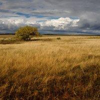 Осенние поля :: Дмитрий TDAdiz