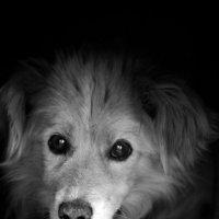 собака :: Екатерина Пугач