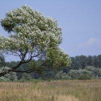 Дерево :: Роман Кузичев
