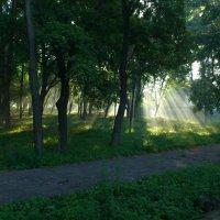 Утро в парке :: Виктор Николенко