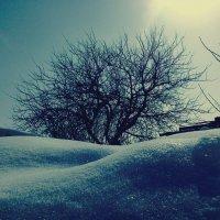 зима :: Анастасия Большакова