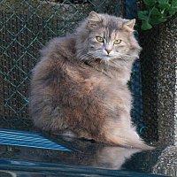 кошка :: Korto Maltez