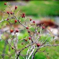 весна :: Юлия Куйдина