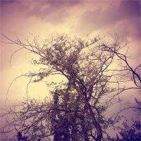 дерево за моим домом :: Инесса Морозова