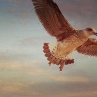 чайка :: Кристина Вейт