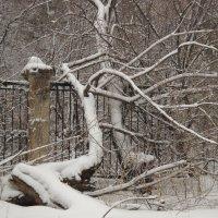 Зимние причуды :: Светлана Игнатьева