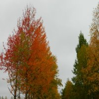 Осенние краски :: Натали V