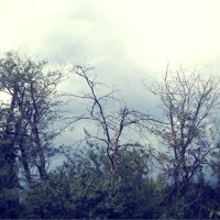деревья в тумане :: Инесса Морозова