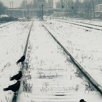 Белая ворона :: Алексей Сокун