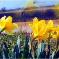 Цветы :: Natalie Osipovа