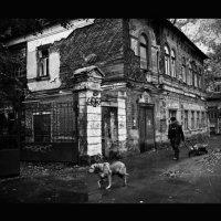 Собачья работа... :: Надежда Фетисова