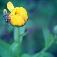 Цветок и жучок :: Елизавета Горенкова