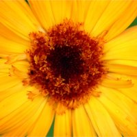 Солнце в цветах :: Елизавета Горенкова
