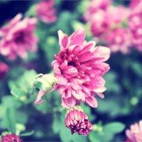 Цветы :: Елизавета Горенкова