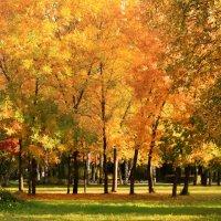 осень :: Ирина Шабалина