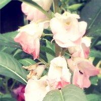 просто цветок :: Инесса Морозова