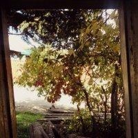 Вид из окна :: BeGiNnEr CaMeRiSsSt