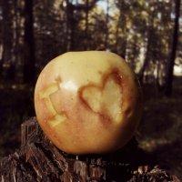 I ♥... :: BeGiNnEr CaMeRiSsSt