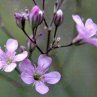 байкальские цветы :: Irina Bikmetova
