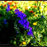 Прекрасный синий цветок :: Анастасия Зубарева