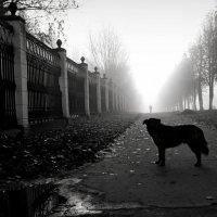 туман :: Татьяна Соловьева