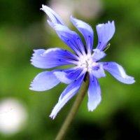 аленький цветочек :: Ксения Сутырина