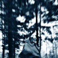 Запретный лес :: Хитрое Тело
