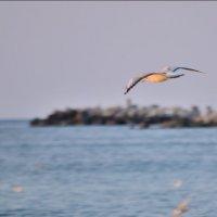 птичка :: Павел Сущёнок