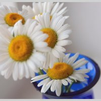 Ромашки в синей вазе... :: Вероника Любимова