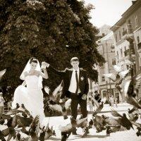 Любовь и голуби :: Таня Барилка